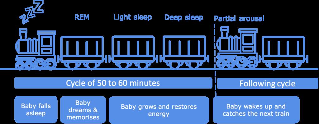 Sleep cycles train - 6 months baby